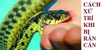 Cách xử lý vết thương khi bị rắn cắn